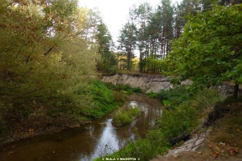Rezerwat rzeki Świder