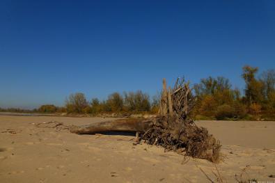 Wisła, plaża w rezerwacie